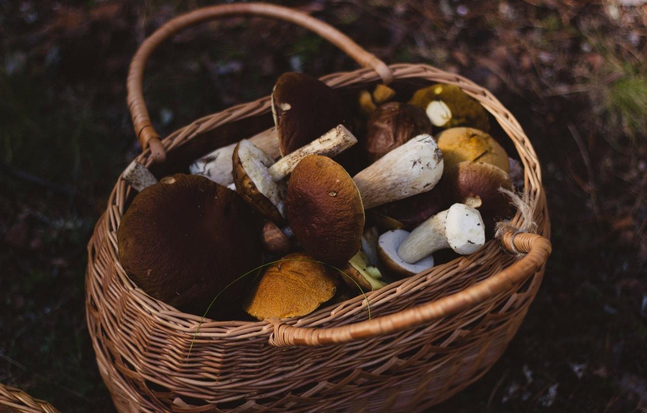 mushroomhuntercorp3